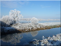 TL5392 : Winter in Suspension Bridge - The Ouse Washes near Welney by Richard Humphrey