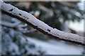 SK5837 : Ice glazed branch in Bridgford Park by Kate Jewell