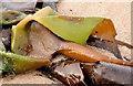 J4080 : Seaweed, Cultra (2013-3) by Albert Bridge