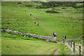 SY9976 : Walkers on the coast path near Dancing Ledge, Langton Matrvers by Phil Champion