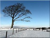 NY0884 : Old beech tree by Lynne Kirton