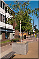 TQ4666 : Orpington High Street  Improvement - commemorative tree by Ian Capper