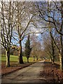 SX8078 : Tree-lined avenue, Parke by Derek Harper