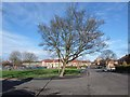 NZ2165 : Green space in Fenham by Oliver Dixon
