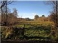 SX7585 : Field by the Wadley Brook by Derek Harper