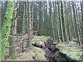H5082 : Ditch, Gortin Glen Forest by Richard Webb