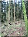 H5082 : Gortin Glen Forest by Richard Webb