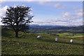 SD5494 : Sheep on Hay Fell by Ian Taylor