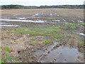 SY8693 : Fields at Lower Woodbury by Nigel Mykura