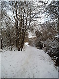 SO9194 : Snowy Park Path by Gordon Griffiths