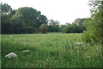 TG1807 : Water meadow by the Yare by N Chadwick