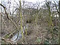 SJ9495 : A Glimpse of the Godley Brook by Gerald England