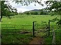 NC8400 : Sheep grazing near to Dunrobin Castle by Robin Drayton