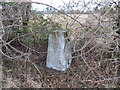 TL1260 : Ordnance Survey Trig Pillar S9374 by Peter Wood