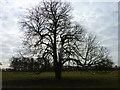 TQ9057 : Winter tree on Torry Hill farmland by pam fray