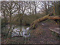 TQ6786 : Pond at Lincewood, Langdon Nature Reserve by Roger Jones