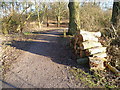 TQ5156 : Path at Sevenoaks Wildlife Reserve by Marathon