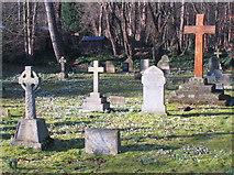 SD2806 : Snowdrops in St Luke's churchyard, Formby by David Hawgood