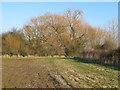 TL9714 : Willow on field boundary, Abbotts Hall Farm by Roger Jones