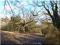 SP5605 : Winter Woodland, Shotover by Des Blenkinsopp