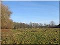 TQ1715 : Old Furze Field by Simon Carey
