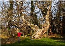 NO3524 : Man shoots tree by William Starkey