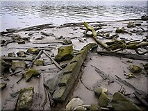NZ1665 : Remains of the Ryton Wherries, west of Newburn Bridge by Andrew Curtis