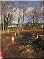SX8770 : Path through the felled trees, St Marychurch Road by Derek Harper
