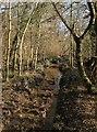 TQ1515 : Footpath, Jack O'Lantern Wood by Simon Carey