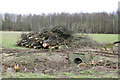 SK5029 : A pile of trees by Alan Murray-Rust