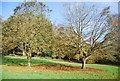 TQ5838 : Tunbridge Wells Common by N Chadwick
