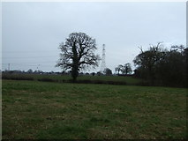 SJ7556 : Farmland near Woodside Farm by JThomas