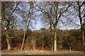 SU4583 : Trees on Knollhill Covert by Steve Daniels