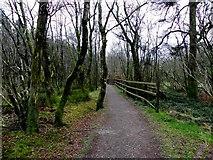 H5776 : Path at Altdrumman by Kenneth  Allen
