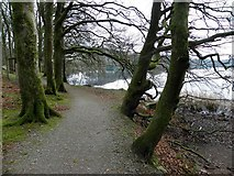 H5776 : Woodland path, Loughmacrory by Kenneth  Allen