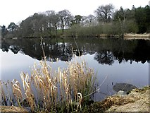 H5776 : Reflections, Loughmacrory Lough by Kenneth  Allen