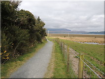 NX4355 : Path beside the Wetlands by Billy McCrorie