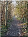 SP9312 : Grand Union Canal Walk off Marshcroft Lane by Rob Farrow
