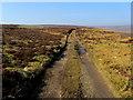 SE1167 : Track on Heathfield Moor (1) by Chris Heaton