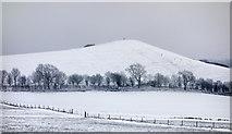 SU1261 : Picked Hill by Gillie Rhodes