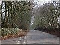 ST1107 : Golden Lane from Southcott Cross by David Smith