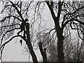 TA0340 : Urban  Tree  Felling  (3) by Martin Dawes