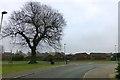 SK8254 : Large Oak by David Lally