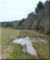 SP4217 : Footpath through Blenheim Park by Graham Horn