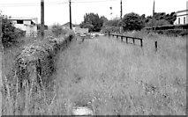 S7127 : New Ross railway station (1999-2) by Albert Bridge