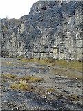 SK2076 : Furness Quarry, Stoney Middleton by Trevor Littlewood