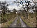 SJ4785 : Ash Lane (track) by David Dixon