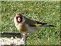 SO1107 : Goldfinch, Rhymney by Robin Drayton
