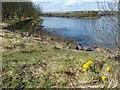 SO1209 : A splash of yellow, Bryn Bach Park by Robin Drayton
