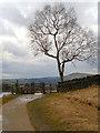 SE0103 : Tree, Gate and Stile by David Dixon